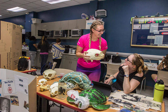 students at a table covered with turtle skulls and models